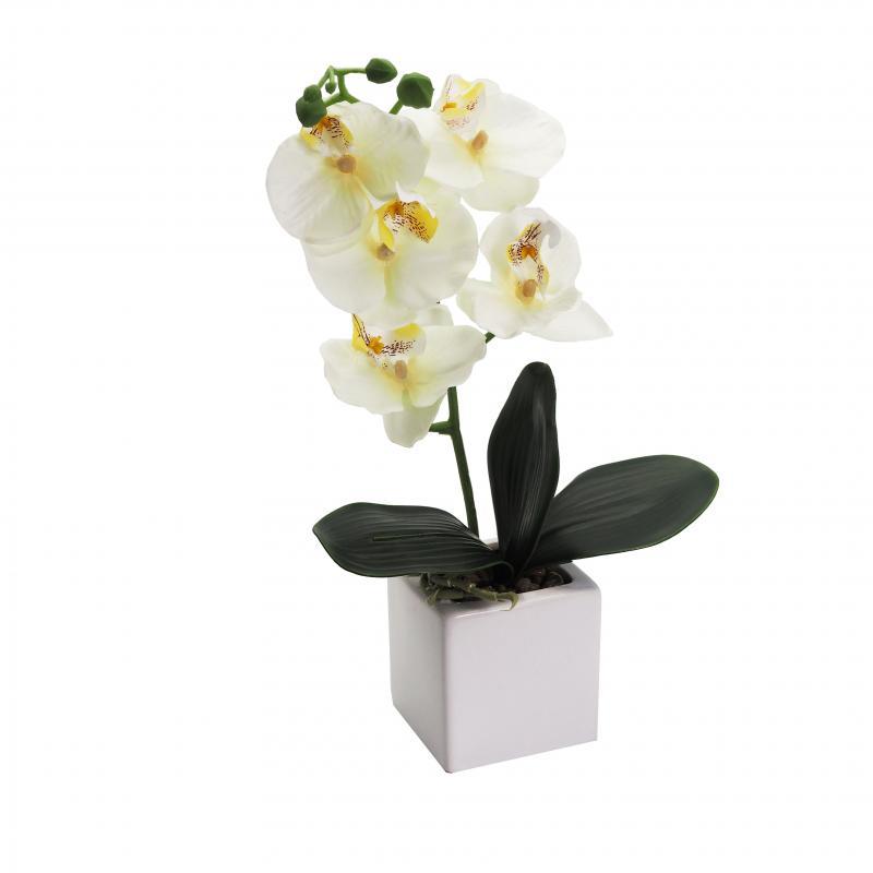 Orchideen im Keramiktopf